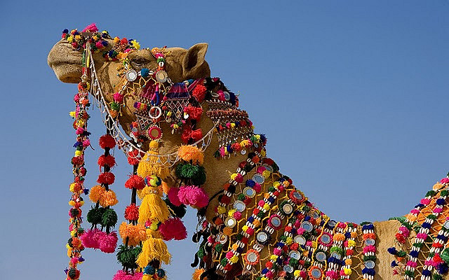 decorated-camel-in-the-thar-desert-2c-jaisalmer-2c-rajasthan-2cindia_1920x1200_69131