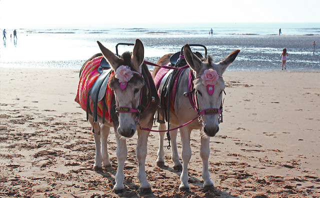 Donkeys Willow and Nicole on Blackpool beach.